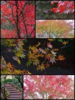 箱根 小涌園 蓬莱園 紅葉