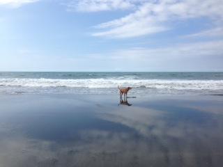 beachskud.jpg