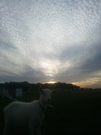 【写真】ポールの頭上に広がる夕方の鱗雲(うろこぐも)