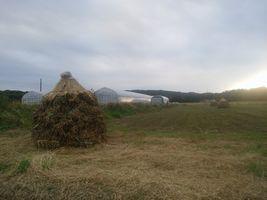 【写真】隣りののぶ子さんの畑にできた大豆のボッチ