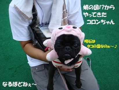 201110ばんパグ2