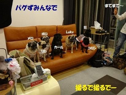201210ばんパグ4