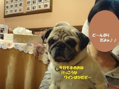 201404伊豆3