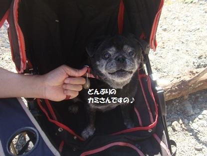 201410朝霧8