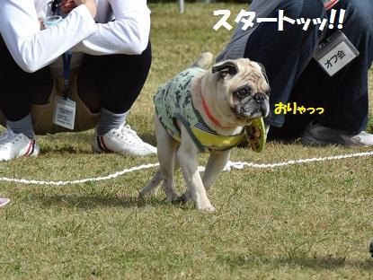 201410朝霧2