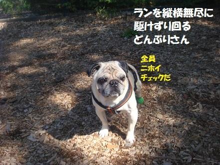201409軽井沢1