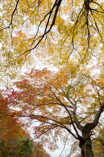 日南町 生山 石霞渓 紅葉