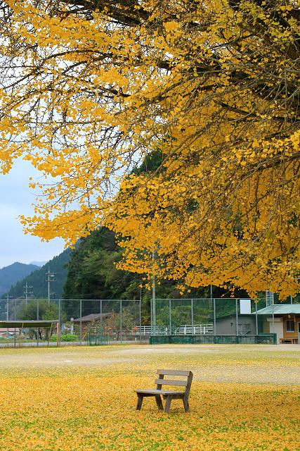 旧日野小学校の銀杏