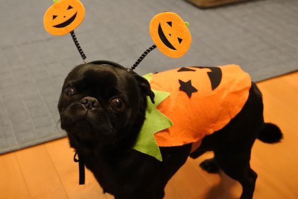 かぼちゃうる