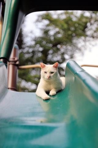 すべり台上の猫