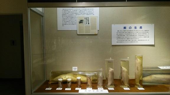 くじら博物館7