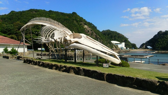 くじら博物館8