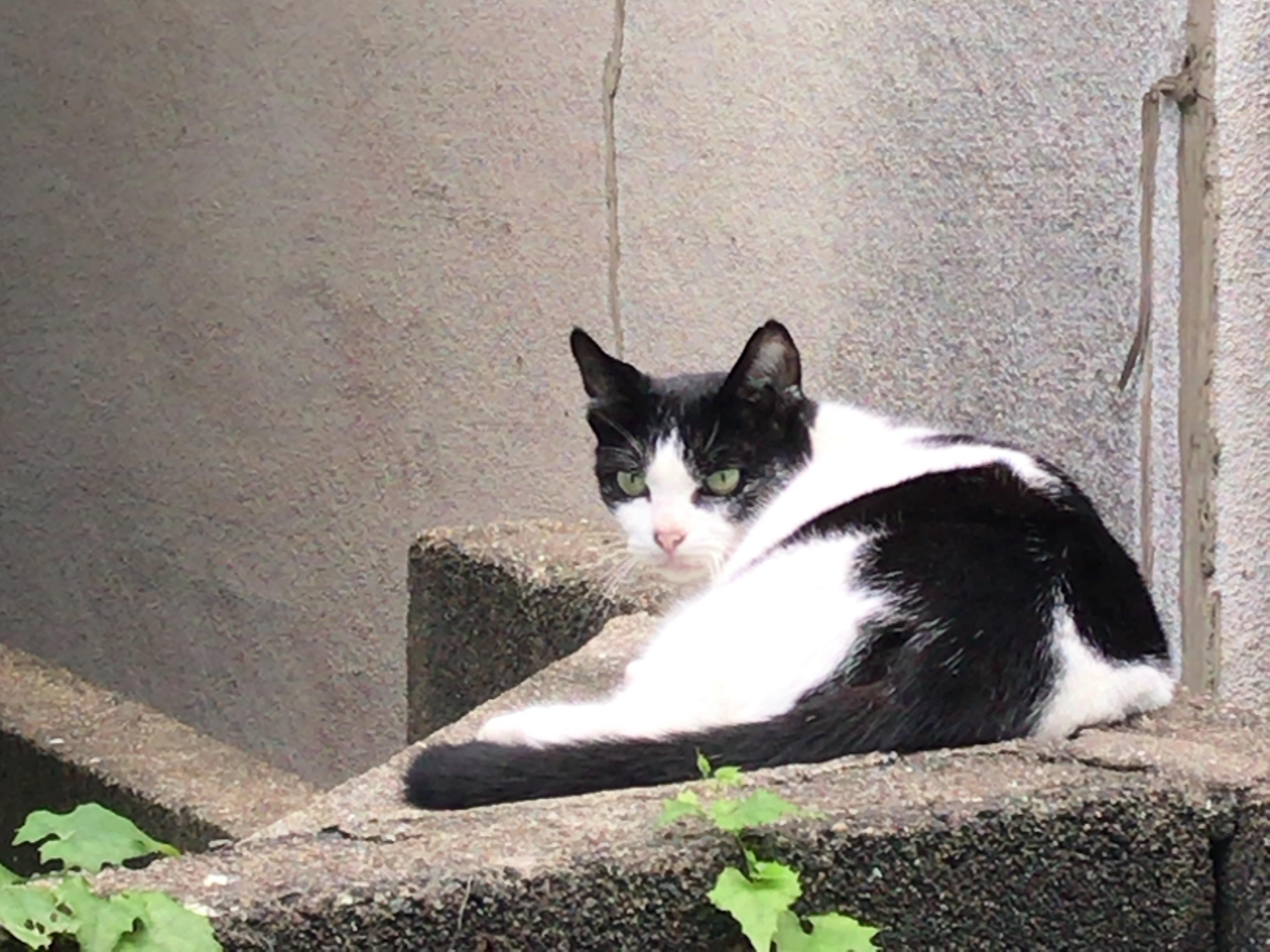 ご近所に住む飼い主の居ない猫ちゃん