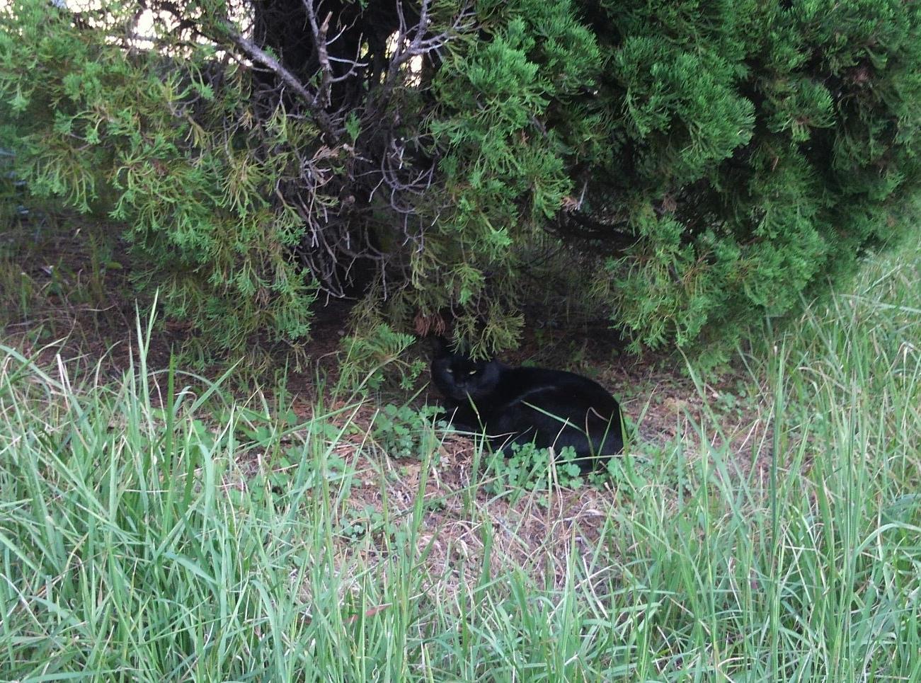 大阪で木の下で休憩中の猫ちゃん