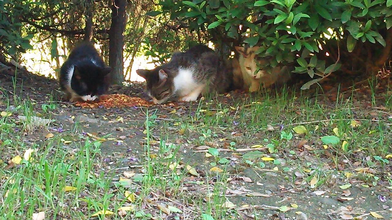 大阪で動物隙の住人さんにご飯をもらっている猫達