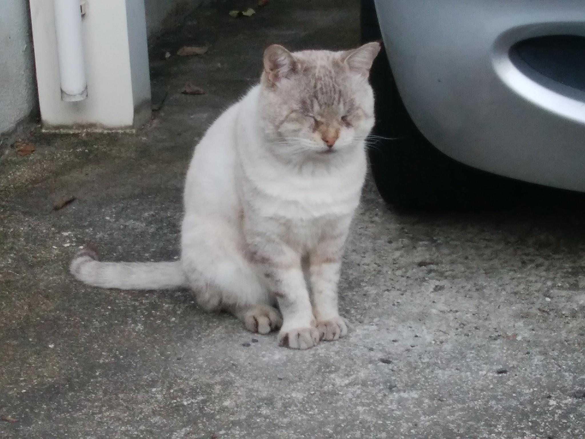 大阪でうたた寝している猫ちゃんを発見
