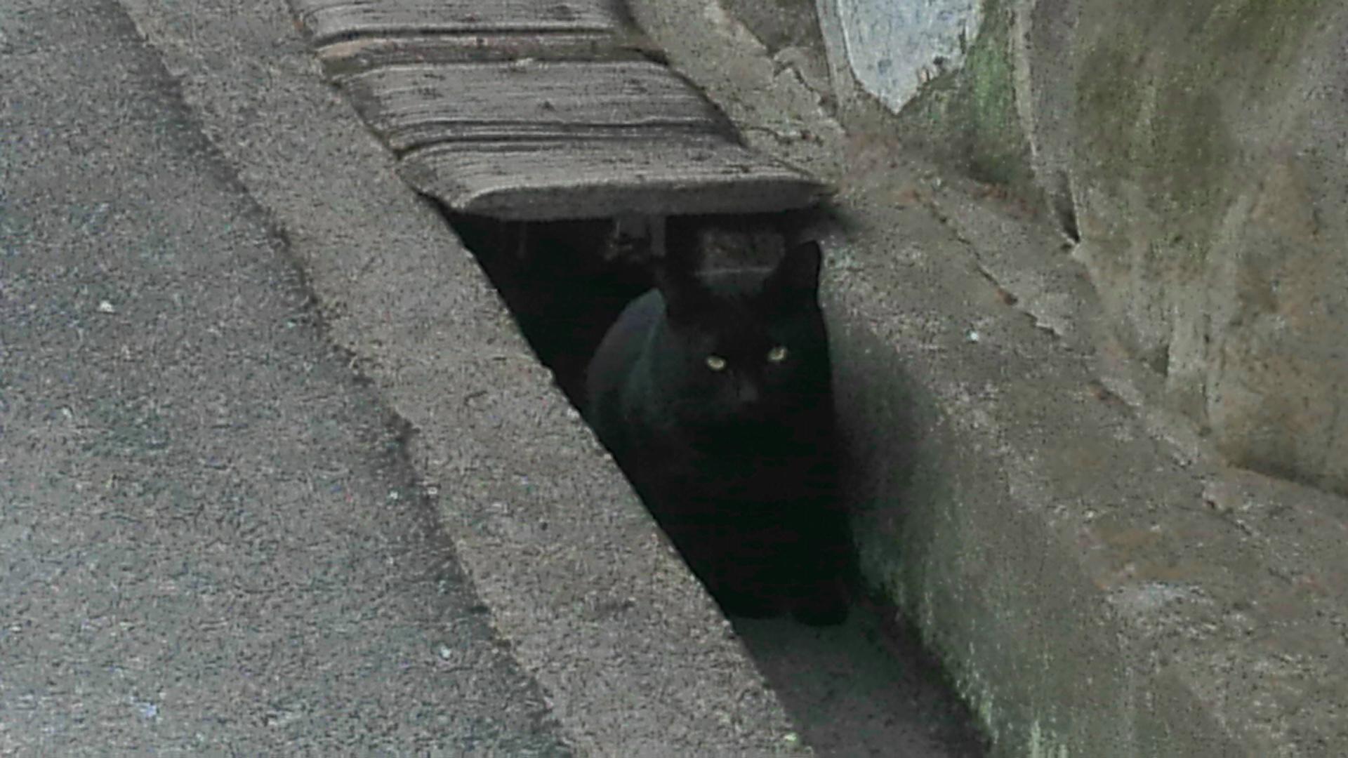 「ご飯まだ?」フードを待つアグネス家の近所の猫ちゃん
