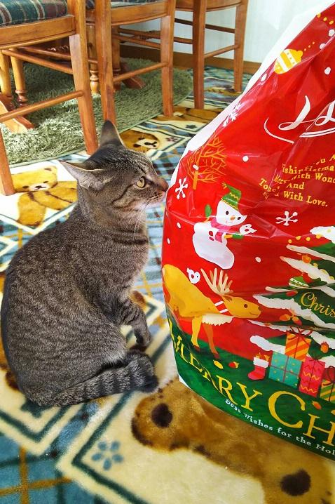 クリスマスりーちゃん2