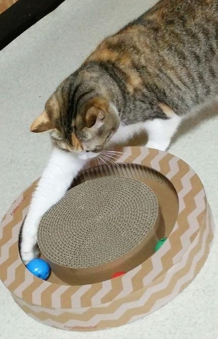 8海ちゃんなかなか、ボールが取れないニャンと末っ子猫のキキちゃん