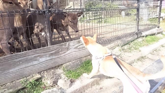 鹿さんたちが一斉に集まり、マリリンと鼻をくっつけて挨拶しました