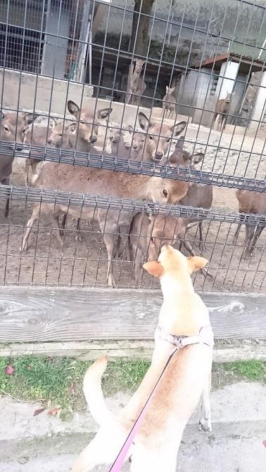 鹿さんたちが一斉に集まり、マリリンと鼻をくっつけて挨拶しました1