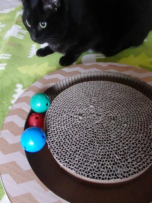 猫ちゃんママ1