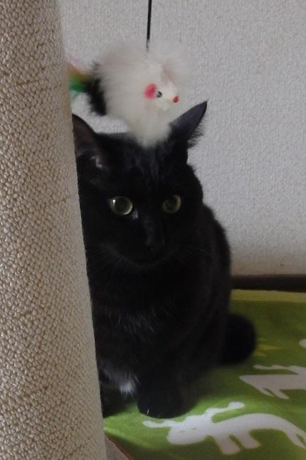猫ちゃんママ4