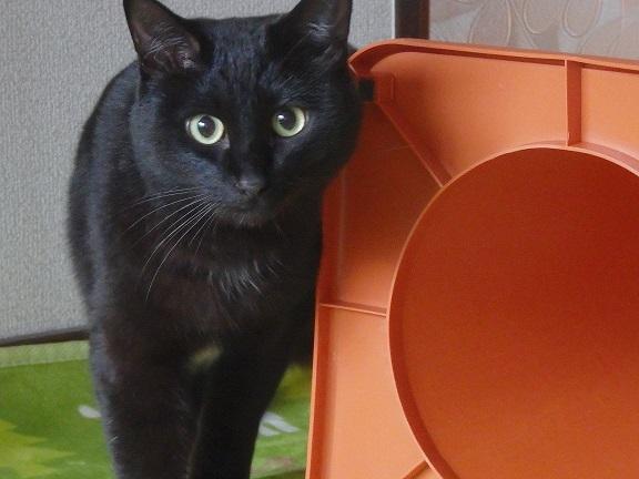 猫ちゃんママ6