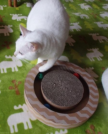 猫ちゃんママ11
