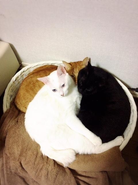 ギューギューの猫団子😅