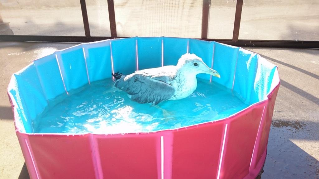 水浴びをしようとするジョナサン✨❤✨