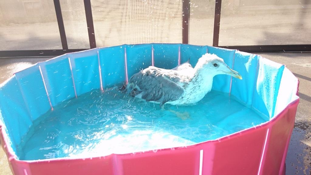 激しく水浴びをするジョナサン