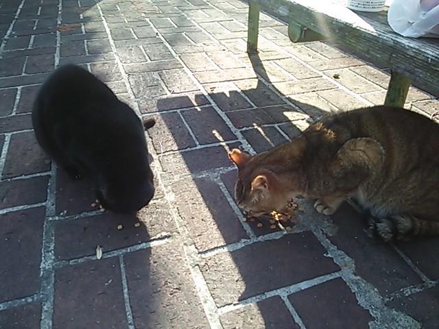 大阪の公園の猫達 アグネス