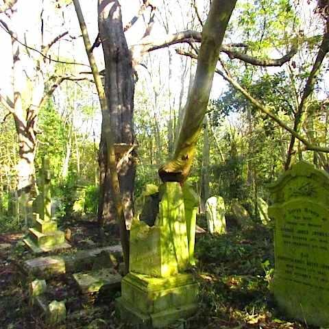 2017-11 墓地3