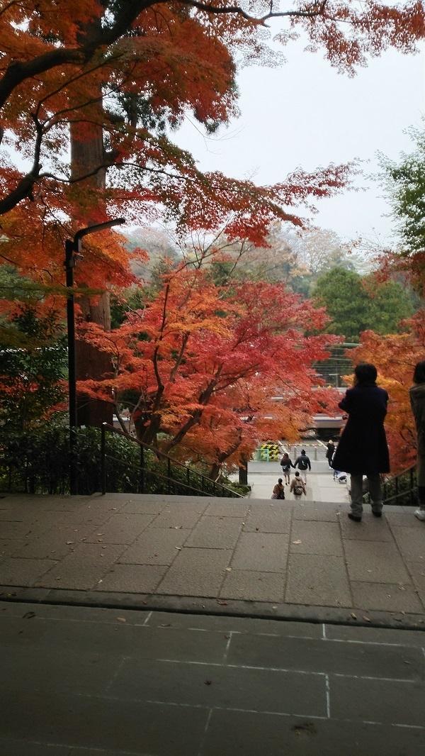 円覚寺から線路側を観る