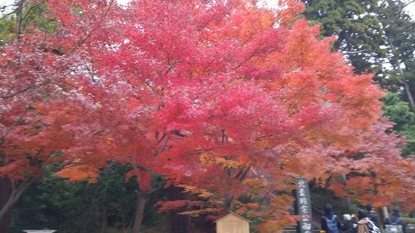 線路から円覚寺の紅葉を観る