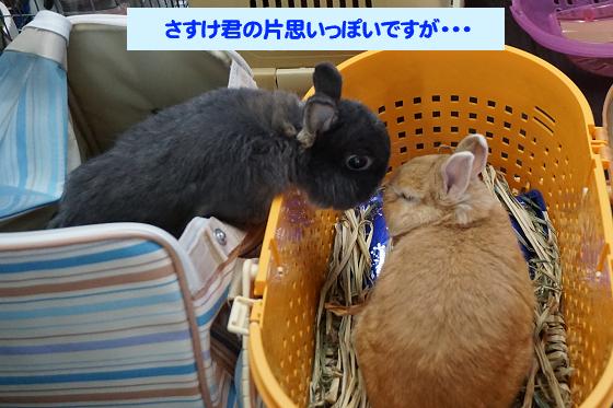 ぴょん子171008_01