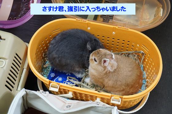 ぴょん子171008_02
