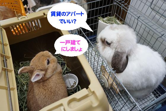 ぴょん子171008_03