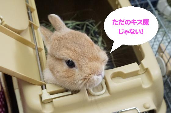 ぴょん子171008_04