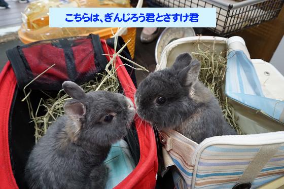ぴょん子171008_09