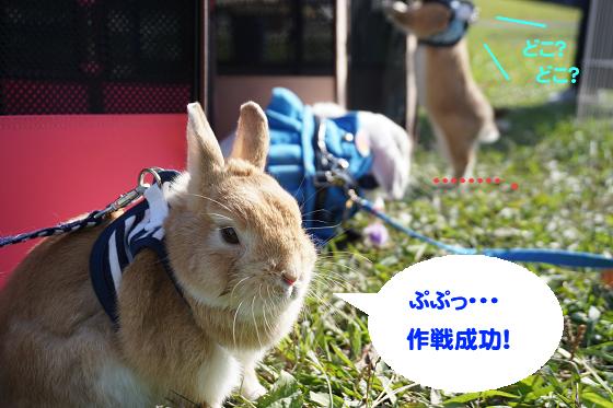 うさんぽ会1120_05