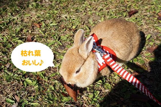 ぴょん子171203_03