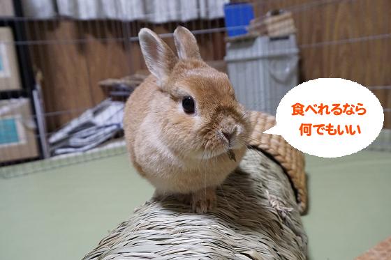 ぴょん子171209_03