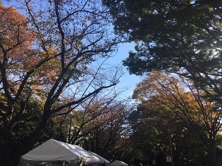 関東の初秋