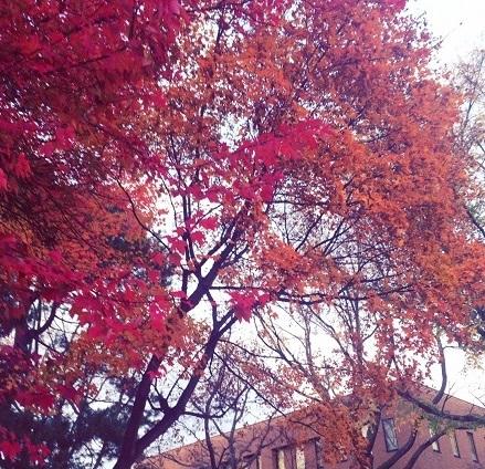 北海道の晩秋
