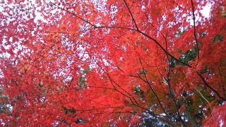 灰塚の紅葉