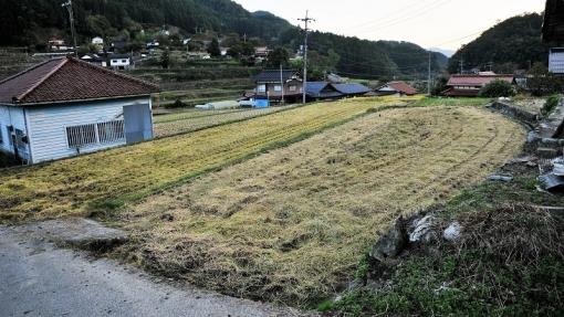 7221稲刈り1710162