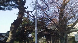 2016年04月09日 長寿温泉3