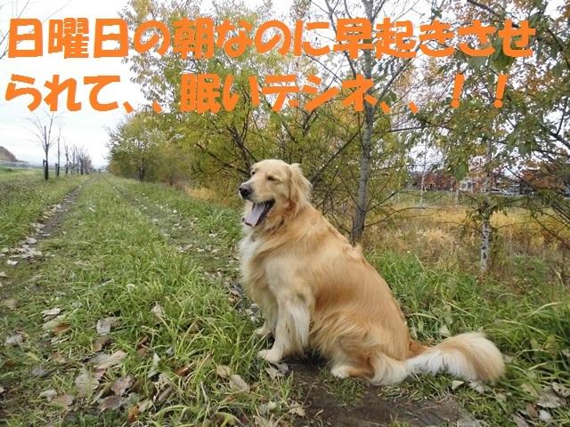 CIMG2698_P.jpg